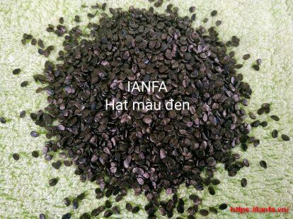 Hạt màu đen dùng cho nhựa kỹ thuật cao
